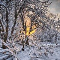 заброшенный сад :: Андрей Иванов