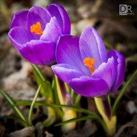 Весна :: Дмитрий Руковичников