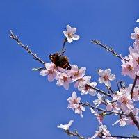 Весна! :: Александр Земляной