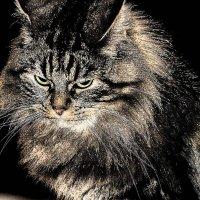 Знакомый Льежский кот :: MVMarina