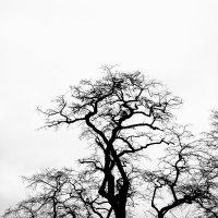 tree :: Юля Рудакова