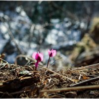 Февраль в горах :: сАха везянК
