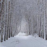 зима :: Анатолий Пименов