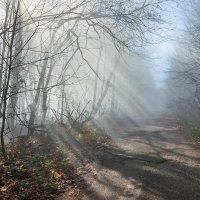Весенний туман_2 :: Юрий Шевченко