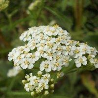 цветочки :: Екатерина Кононенко