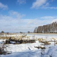 Заболоченное место зимой. :: Валерий Тумбочкин