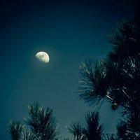 Night moon :: Vic Noon
