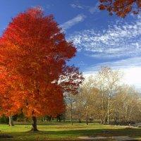 Осень в Вирджинии :: Илья Трейгер