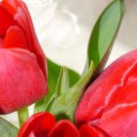 тюльпаны :: Екатерина Чурина