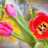Цветы от любимых :: Juliya Fokina