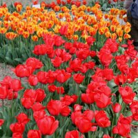 Весна :: Ольга Волкова