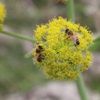 Пчёлки на работе :: Игорь Парицкий