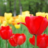 Весна. :: Нелли *