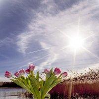 весенние надежды :: liudmila drake