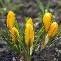 Весна пришла :: Владимир Богославцев(ua6hvk)