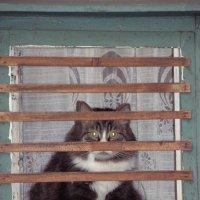 Сижу за решеткой :: Irina Laok