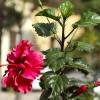 Просто цветок... :: Игорь