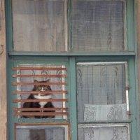 Питерский кот :: Irina Laok