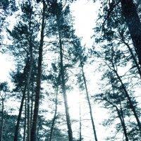 лес :: Виктория М
