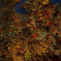 Осень :: Даша Ковалекно