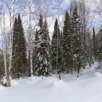 Прогулка по лесу :: Павел Сухоребриков
