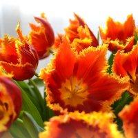 Тюльпаны :: Аnna M...