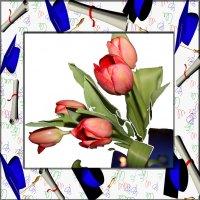 букет красных тюльпанов :: Наталья Золотых-Сибирская