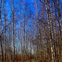 Весна идет :: Эдуард Басов