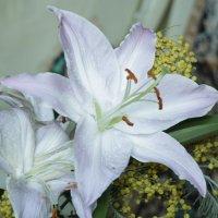 Весенние цветы :: Дарья Ефремова