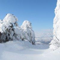 Зима снежная :: Nik Зонов