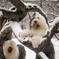 мышь на дереве :: Лариса Батурова