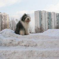 Мышь на горке :: Лариса Батурова