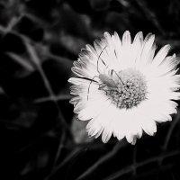 flower :: Юля Рудакова