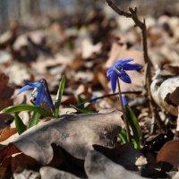 Весна пришла :: Вячеслав Гостев