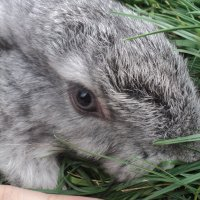 Кролик :: Кристина Урманова
