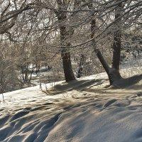 старая лыжня :: Владимир Матва