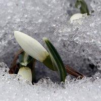весна :: Laryan1
