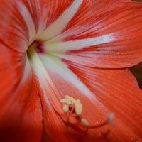 Цветок :: Дима Красовский