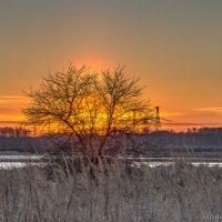 Огненное дерево :: Дмитрий Буданов