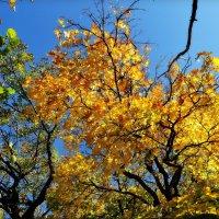 золото осени :: Ник Карелин