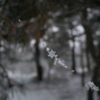 снежные бусы :: Ольга Алешко