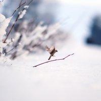 Зимнее морозное утро :: Анатолий Клепешнёв