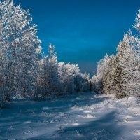 январь :: Юрий Сименяк