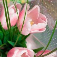 Весенне тюльпаны :: Анастасия Сысоева