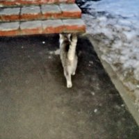 Ну, я пошёл -  дамочка ждёт! :: Ольга Кривых