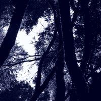 лес :: Дмитрий Саныч