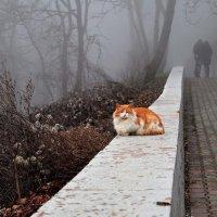 Он, она и рыжий кот :: Ольга Мальцева