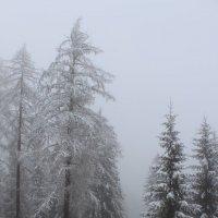 Зима :: Лариса Акбашева