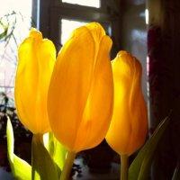 Весеннее солнце. :: Кристина Кеннетт