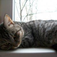 Кошка на окошке :: Галина Pavel